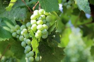 Politische Weinprobe 2020 @ Alter Bahnhof